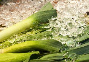 Étel fotó alapanyag póréhagyma jégdarabok között